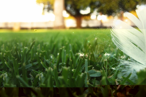Amazing Grass wallpaper for Android